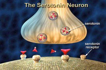 Depression Treatment Gold Coast Serotonin
