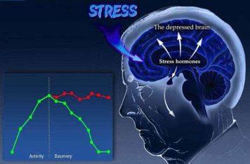 Depression Treatment Gold Coast: The Brain